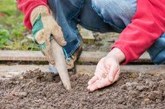 Sowing. Gardener sowing seeds of radish Stock Photos
