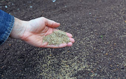 Sowing grass seed into the soil Royalty Free Stock Photos