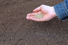 Sowing grass seed into the soil Royalty Free Stock Images