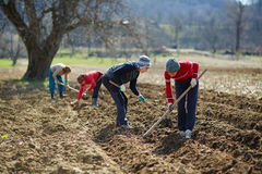 Sowing potatoes Stock Images