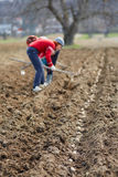 Sowing potatoes Royalty Free Stock Photography