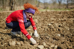 Sowing potatoes Stock Photos