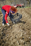 Sowing potatoes Royalty Free Stock Photos