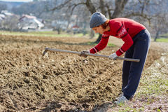 Sowing potatoes Royalty Free Stock Images