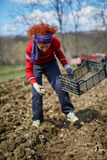 Sowing potatoes Stock Photography