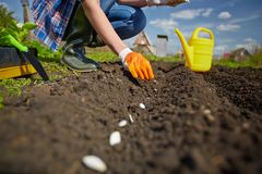Sowing in row Stock Images