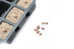 Sowing sakura Royalty Free Stock Image