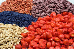 Sowing seed. Colored  sowing seed close up Royalty Free Stock Image