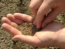 Sowing seeds Stock Photos