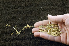 Sowing the seeds Stock Images