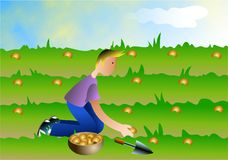 Sowing Seeds. Boy sowing seeds in a field Stock Photos
