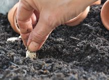 Sowing seeds Royalty Free Stock Images