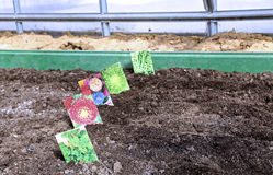 Sowing seeds in the soil in the garden Royalty Free Stock Image
