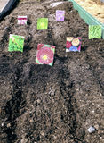 Sowing seeds in the soil in the garden Stock Photos
