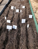 Sowing seeds in the soil in the garden Royalty Free Stock Photography