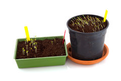Sowing seeds in spring. Time with yellow labels Stock Photo