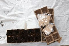 Sowing seeds in spring in biodegradable peat pots royalty free stock image