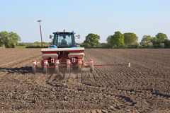 Sowing sugar beet Stock Photo