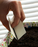 Sowing time. Sowing or seeding seed with hand in to the pot with fresh soil Stock Images