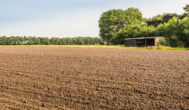 Sown cultivated soil Stock Photo