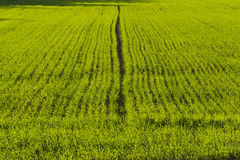 Sown Farm Field Royalty Free Stock Photography