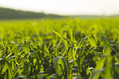 Sown Farm Field Royalty Free Stock Photos