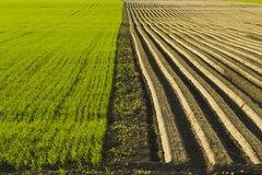 Sown Farm Field Royalty Free Stock Images