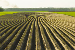 Sown Farm Field Royalty Free Stock Photo