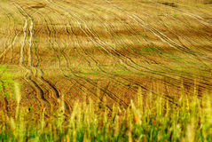 Sown field. View of wavy sown field Royalty Free Stock Photo