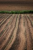 Sown field. Tilt shift view of a brown sown field with green sprouts in tuscany. Narrow depth of field Royalty Free Stock Images