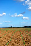 Sown field. Field of maize sown in the south of Portugal Stock Photo