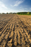 And sown field with blue sky Stock Photo