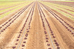 Sown field Royalty Free Stock Images