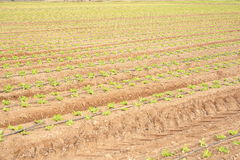 Sown field Royalty Free Stock Photos