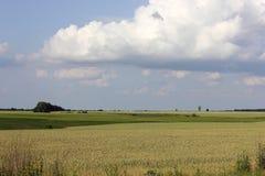 Sown field landscape Stock Images