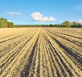 Sown field Stock Photos