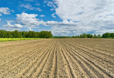 Sown field. Spring scene. Kaluga region of Russia Royalty Free Stock Photo