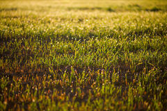 Sown field Stock Photography