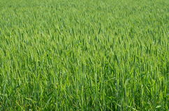 Sown fields , southern Bohemia Stock Photography