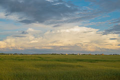 Sown green field Royalty Free Stock Images