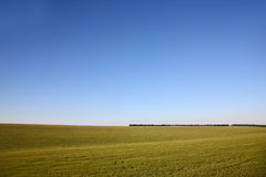 Sown with wheat field on background of the sky. The sown with wheat field on background of the sky Stock Photography