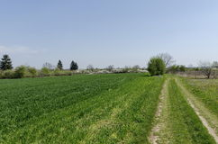 Sown wheat field and blossom trees in spring. Zavet town, Bulgaria Stock Image