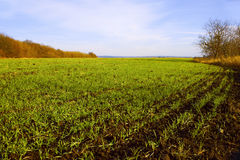 Sown winter wheat field (I) Stock Image