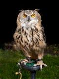 sowy żerdź Obrazy Royalty Free
