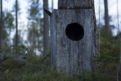Sowy domowa pozycja z powodu mechatego lasu obok sosny, obrazy stock