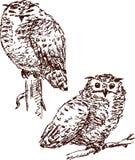 sowy dwa Obrazy Royalty Free