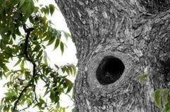 Sowy dziura Fotografia Royalty Free