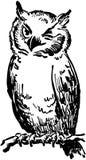 sowy mrugać Obraz Royalty Free