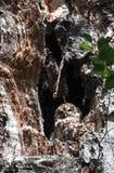 Sowy obsiadanie w wydrążeniu drzewo obrazy royalty free