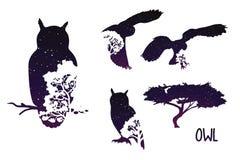 Sowy sylwetka Z nocnym niebem I drzewami setu zwierzęcy ilustracyjny wektor Fotografia Royalty Free